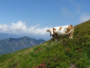 Alpbachtal i Wildschönau, czyli nasz niezapomniany urlop  z dziećmi w Alpach