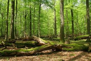 Park Narodowy Harzu
