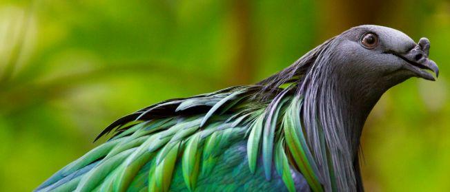 Dżungla Weltvogelpark Walsrode