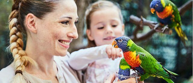 Papugi Weltvogelpark Walsrode
