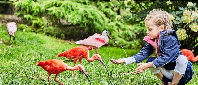 Hala swobodnych lotów Weltvogelpark Walsrode