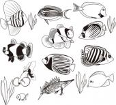 Ryby raf koralowych