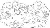 Wiosenny staw z kaczkami
