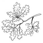 Żołędzie i liście