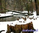 MORYSIN! | zimowe zwiedzanie rezerwatu przyrody - Warszawa - zajęcia dla dzieci