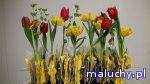 Podróże z tulipanem / warsztaty przyrodnicze dla dzieci - Warszawa - zajęcia dla dzieci